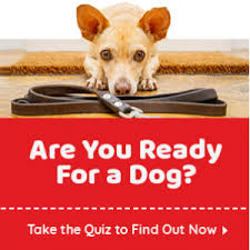Dog Breed Compatibility Chart Dog Matchup Dogtime