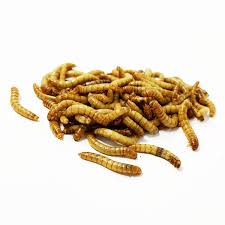 Mealworm Size Chart 1 000 Medium Mealworms