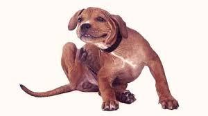 a puppy scratching an itch