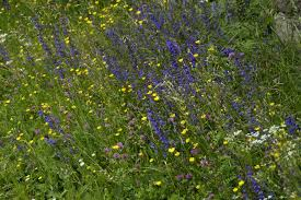 Wildflower Garden Design Beauteous How To Create A Wildflower Garden For Bees Green Garden Buzz