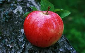 Red Apple Wallpaper Download