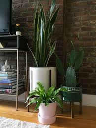 House Plant Tips From The Coolest Mother Daughter Duo The Neon Tea