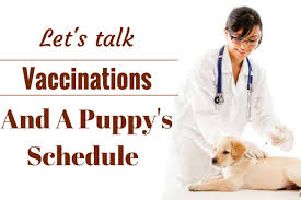 Pug Dog Vaccination Chart Puppies Shots Chart Schedule And Cost Your Puppy