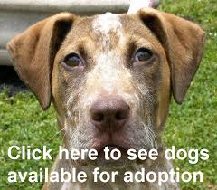 animal shelter dogs for adoption. Unique Shelter Dogs Cats In Animal Shelter Dogs For Adoption W