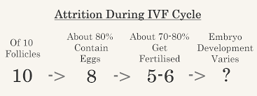 Ivf Treatment Process Fertility Solutions