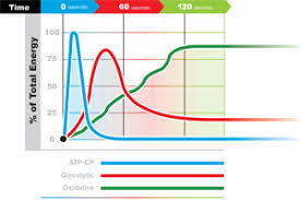 Muscle Recovery Time Chart All About Your Metabolic Energy Systems Experience Life