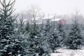 Best UCut Christmas Tree Farms In The Bay AreaValley Christmas Tree Farm