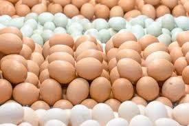 broyler yumurta ile ilgili görsel sonucu