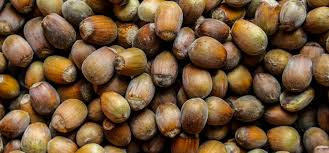 Nut Identification Chart A Guide To Growing Your Own Hazelnuts