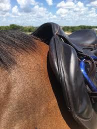 Antares Saddle Flap Size Chart Saddle Fitting Is Fun