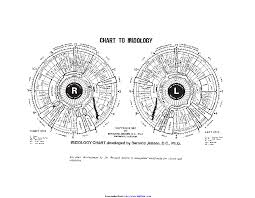 Iridology Chart Pdf Iridology Chart 2 Pdfsimpli