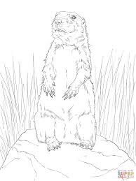 Small Picture Prairie Dog Standing Up coloring page Free Printable Coloring Pages