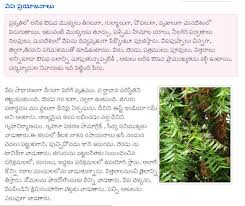 importance of trees essay in telugu