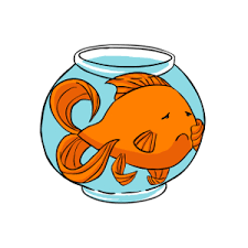 Fantail Goldfish Growth Chart How Big Do Goldfish Get Whats The Average For Different Types