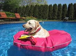 pool floats for dogs. Contemporary Floats Tearresistant Dog Pool Float To Let Your Pet Cool Off On Hot Summer Days Intended Pool Floats For Dogs O