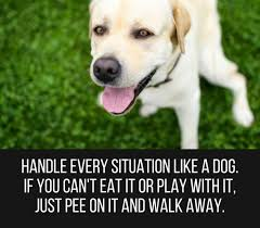 Image result for funny quotations