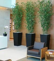 best indoor plants for office. Best Office Indoor Plants | Bomets Intended For Desk D