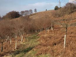 woodland the official blog for the north york moors national park part of the woodland planted approx 16 years ago showing this year s additional planting in