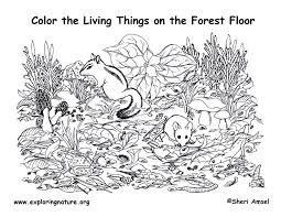 Small Picture Forest Floor Coloring Page