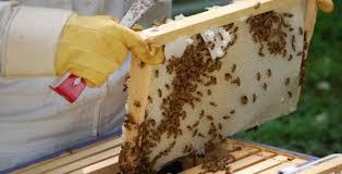 Αποτέλεσμα εικόνας για οι δράσεις του νέου Προγράμματος Μελισσοκομίας.