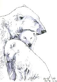 Bear Sketches Polar Bear Sketch By