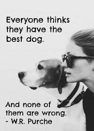 Dog Quotes Love And Loyalty Classy 48 Heartwarming Dog Quotes About Life And Love FallinPets