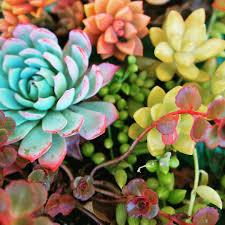 #succulents #garden #arrangement #plants #trees #herbs #vines
