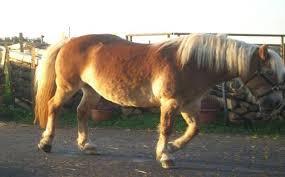 Pferd abnehmen ohne bewegung
