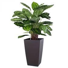 ... Calatea Roseo Picta 80cm zijden plant in Q Mood 45cm ...