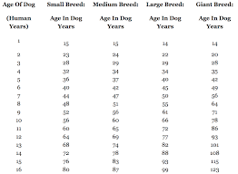 Medium Dog Age Chart No A Human Year Isnt Equivalent To 7 Dog Years