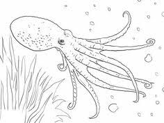 Small Picture Sea Life Stencils Printable Under The Sea Coloring Pages Mr