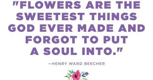 Purple Flower Quotes 12 Lovely Flower Quotes To Fill Your Soul With Calm Youth Village