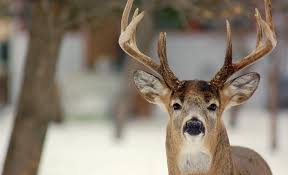 Hunting Deer Before During After The Rut Outdoor Canada