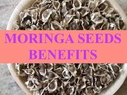 moringa seeds benefits you