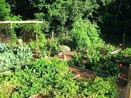 vege garden design vegetable gardens garden design ca raised vege garden design vege garden design