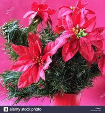 Künstliche Weihnachtsstern Blume Stockfoto Bild 311366141