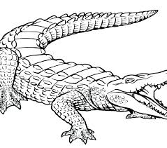 Crocodile Coloring Pages 2154684