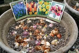 garden bulbs. The Garden Bulbs
