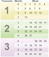Pregnancy By Weeks Calendar How Many Months Is 28 Weeks April 2015 Babies Forums What To