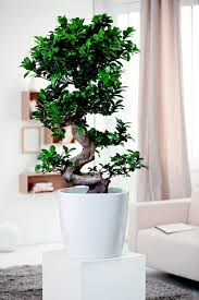 plants feng shui home layout plants. Green Decorating Ideas And Home Accessories Feng Shui Plants For Harmony Positive Energy In The Living Room Layout A