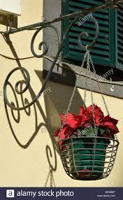 Hängenden Korb Mit Weihnachtsstern Pflanze Aus Schmiedeeisen
