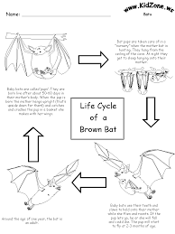 together with Incredible Bats   Kids Bat Activities   Games   Videos   bats moreover V ire Bat   Worksheet   Education together with Best 25  All about bats ideas on Pinterest   Information about as well Fun Preschool Worksheets as well FREE Stellaluna unit   perfect for this time of year   and a great likewise bat hibernation   migration   bears   hibernation   Pinterest further  as well All About Bats   and all kinds of other free printables   HSH as well Bat  habitat  science  natural science  interactive  1st grade also 42 best Science Worksheets and More  images on Pinterest   Science. on bats science worksheets for preschoolers