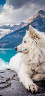 Dog Mobile Wallpapers - Mobile Wallpaper