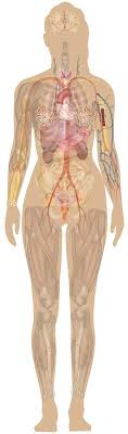 See more ideas about human body, female bodies, human. 13 Human Anatomy Female Ideas Human Anatomy Human Anatomy Female Anatomy