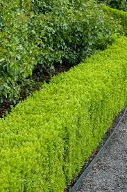 Hedges are a necessary part of every garden, providing privacy, blocking  wind or even buffering noise. But most importantly edges provide structure  to your ...