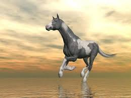 beautiful horses running in water. Plain Water Beautiful Gypsy Vanner Horse Running Upon Water In Front Of Cloudy Sunset  Background Stock Photo  Inside Horses Running In Water N