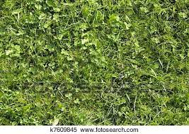wild grass texture. Stock Image - Wild Grass Texture That Perfectly Loop Horizontally And  Vertically. Fotosearch Search Wild ,