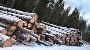 Logging Surge Threatens A Quarter Of Estonias Forest Warn