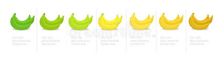Banana Ripeness Stages Infographics Chart Bunch Of Bananas