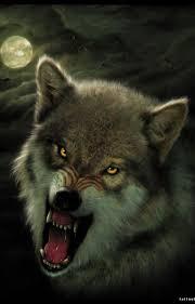 оскал волка картинки